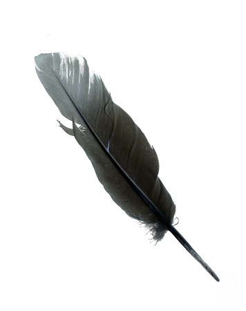 dead duck: Beautiful  feather , isolated on white Stock Photo
