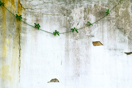 green plant on background wall photo