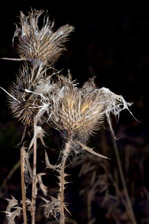 thorn ball on black background photo