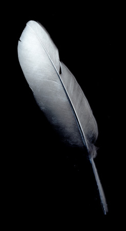 lightly: feather against black Stock Photo
