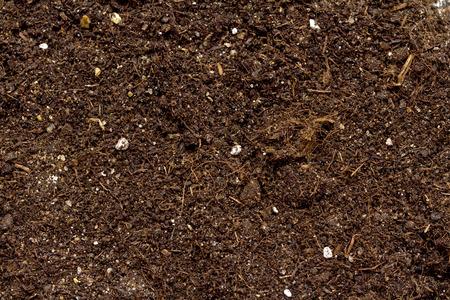 白い背景に分離された植物のための土の山 写真素材