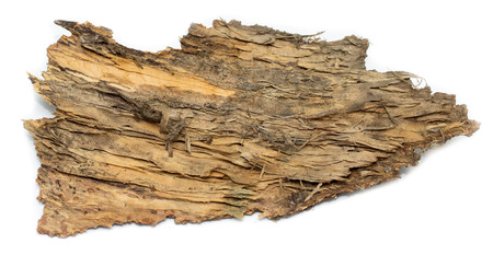 stub: isolated  stub log bark with wooden texture