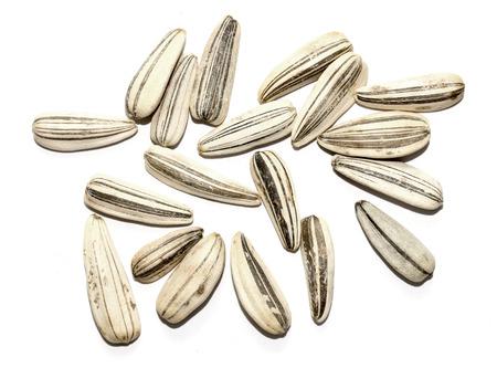 semen: closeup of dry sunflower seeds.