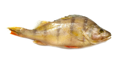 perch isolated on white background Stock Photo
