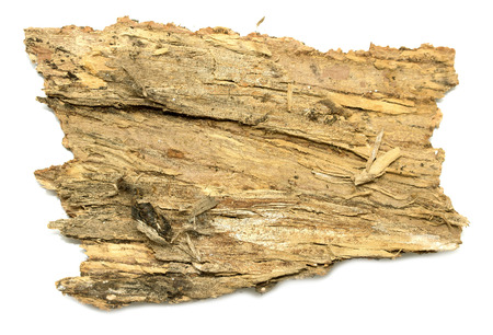 dissemination: isolated  stub log bark with wooden texture