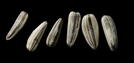 semen: sunflower seeds white not black background Stock Photo