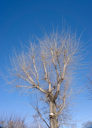 tree branches on a blue sky background Stock Photo