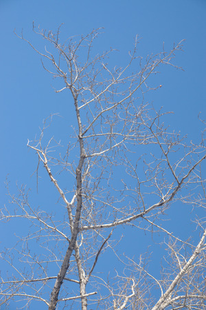 tree branches on a blue sky background photo