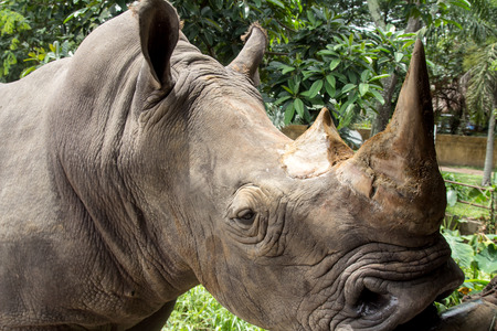 dangerous love: two-horned rhinoceros at the zoo Stock Photo