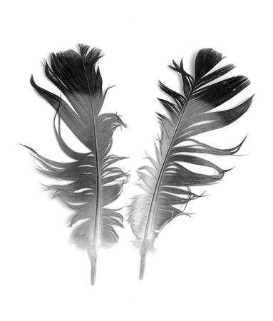 waft: bird feather on white background Stock Photo