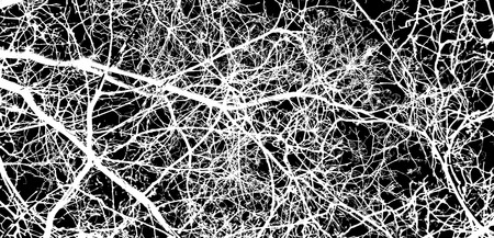 wizened: white tree branches on a black background