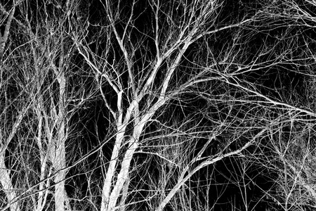 abstraction, white tree branches on a black background photo