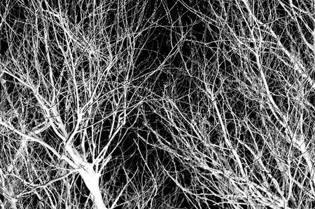 abstraction, branches d'arbres blancs sur un fond noir