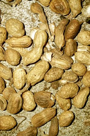 unrefined: Unrefined roasted peanuts Stock Photo