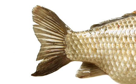 fish tail: fish tail on a white background Stock Photo
