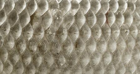 escamas de peces: Escalas de pescados Primer macro Foto de archivo