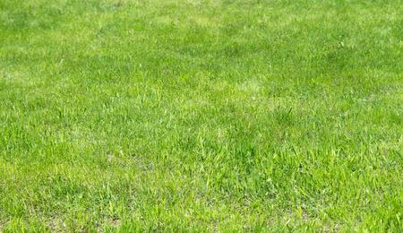 grassy plot: C�sped de hierba verde