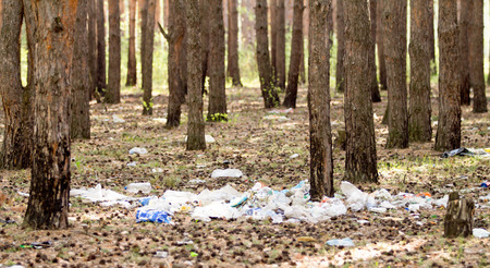 needless: A pile of garbage in the forest ecology