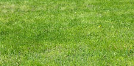 grassy plot: Green grass lawn