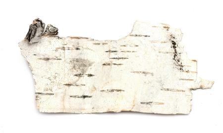 marqueteria: Birch bark texture