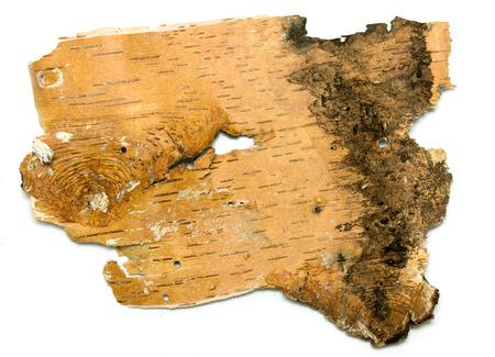 birchen: Birch bark texture