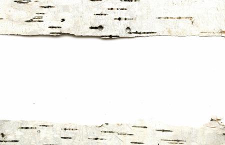 marqueteria: Textura de la corteza de abedul
