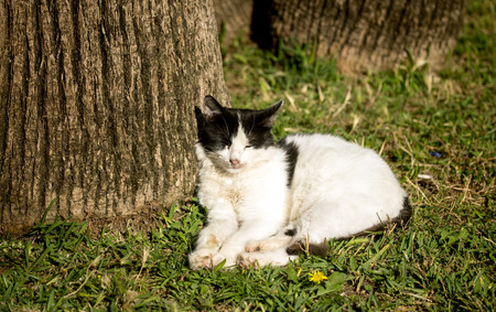 domestic: Domestic cat in nature Stock Photo