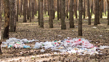 decompose: A pile of garbage in the forest ecology