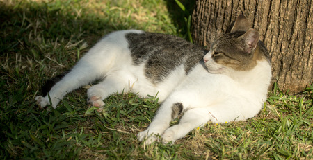 domestic: domestic cat in nature