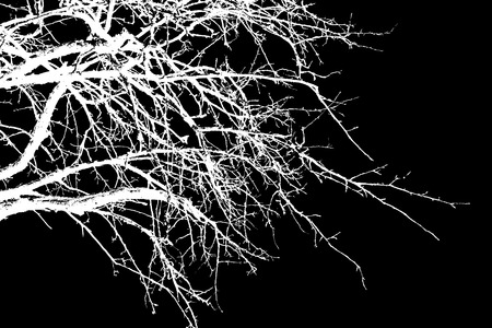 abstraction, white tree branches on a black background Stock Photo