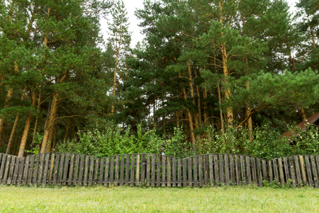 wooden fence: old wooden fence in the forest