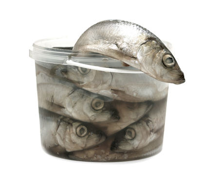 pond smelt: sprats fishes in a plastic bucket on a white background Stock Photo