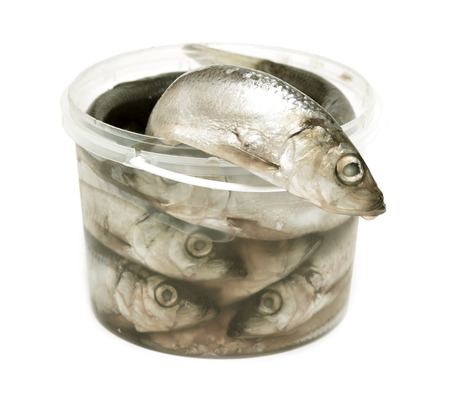 pond smelt: sprats fishes in plastic bucket on a white background