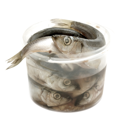 pond smelt: sprats fishes in plastic cup on a white background Stock Photo
