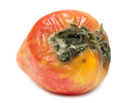 perish: rotten tomato on a white background