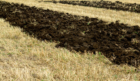 furrows: First on the furrows plowed field Stock Photo