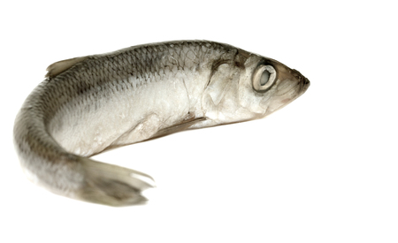 pond smelt: sprats fish on a white background Stock Photo