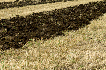 agri: First on the furrows plowed field Stock Photo