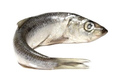 smelt: sprats fish on a white background Stock Photo