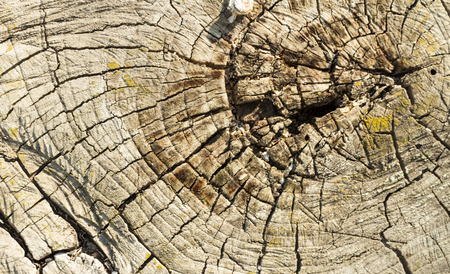 tree felling: tree felling old wooden background