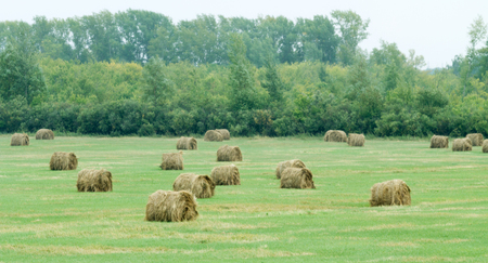 hay field: Autumn hay field in round sheaves