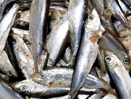 pond smelt: fish sprat background