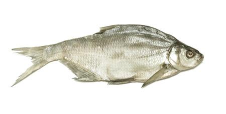 bream: Bream River fish, dried