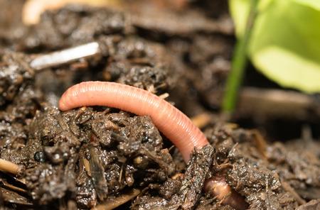 gusanos: gusanos en el suelo