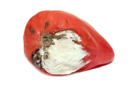 putrefy: red tomato with white mold