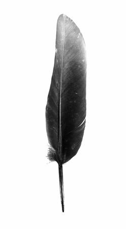 plume d'oiseau noir isolé sur fond blanc