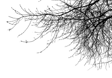 tree branches isolated on the white background