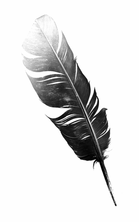 black feather: black bird feather isolated on white background Stock Photo