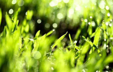 green fields: fresh green grass with water drops, blurred bokeh