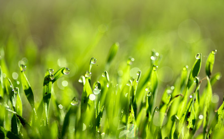 spring green: fresh green grass with water drops, blurred bokeh